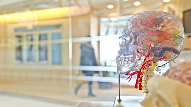 Diagnose Women Interview AnswerMan Article 6821 6821 brain-plastic-3